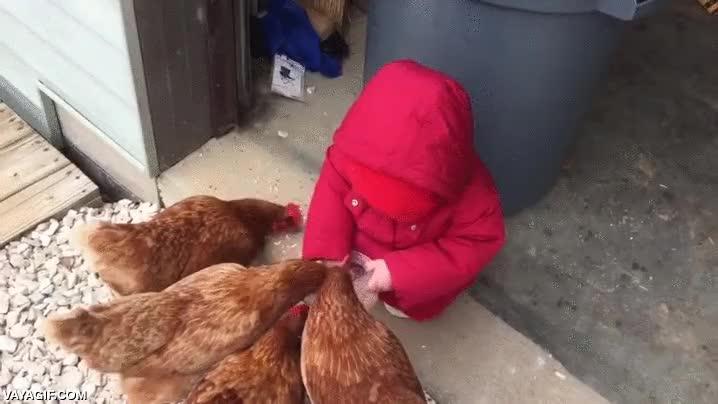 Enlace a El pequeño amiguito de las gallinas que todavía no había aprendido a aterrizar bien