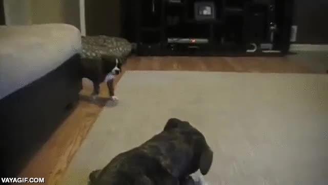 Enlace a Los cachorros de perro pueden llegar a ser muy cansinos
