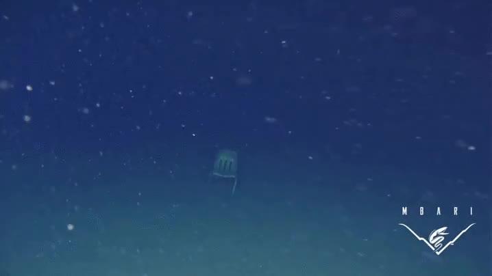 Enlace a Se ha encontrado una silla de pie en el fondo del Océano Pacífico, ¿perturbador no?
