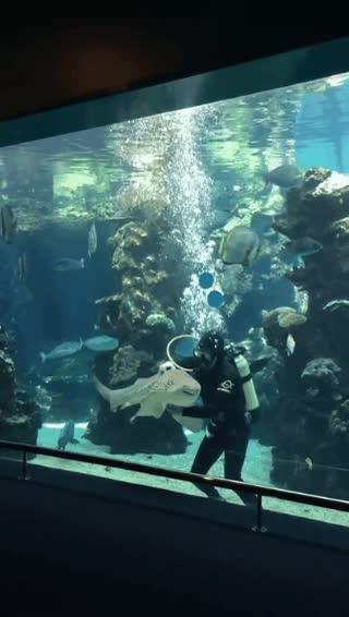 Enlace a El tiburón cebra más mimoso de todo el mar