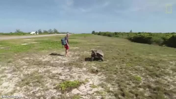 Enlace a La venganza de la tortuga