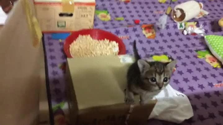 Enlace a Intento de huida felina frustrado a tiempo