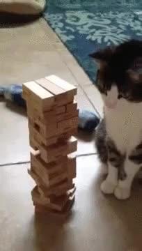 Enlace a Cuando este gato ve que no puede ganar la partida hace lo que se esperaba de un gato