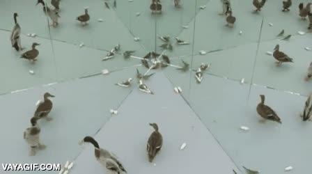 Enlace a Las aves no llevan muy bien el tema de los espejos