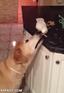 Enlace a Los animales entienden la importancia del trabajo en equipo, hasta entre especies