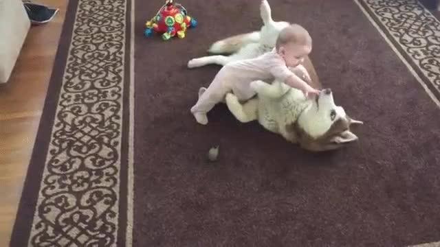 Enlace a Para los que dicen que los perros no deben jugar con los niños por si les hacen daño