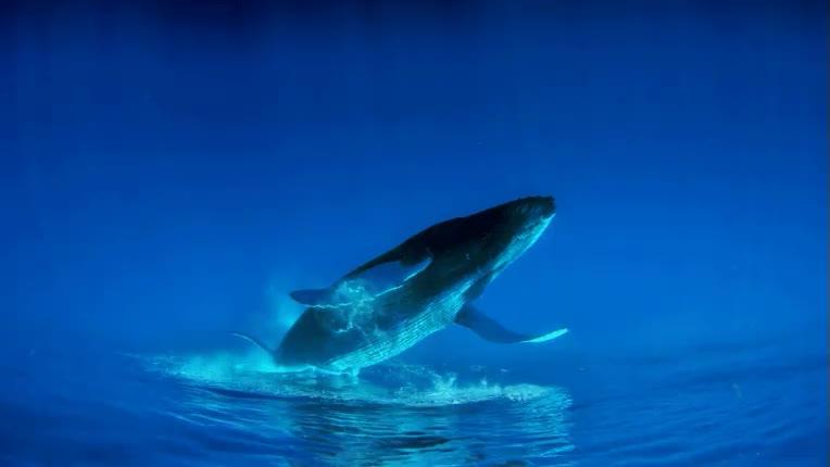 Enlace a ¿Pero qué haces esa ballena flotando encima del agua? No, espera un momento...