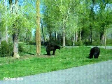 Enlace a La pelea más sanguinaria entre dos osos, más o menos...
