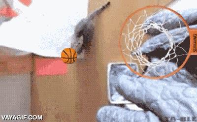 Enlace a Si alguna vez tengo un gato, espero que sea tan bueno en el baloncesto como este