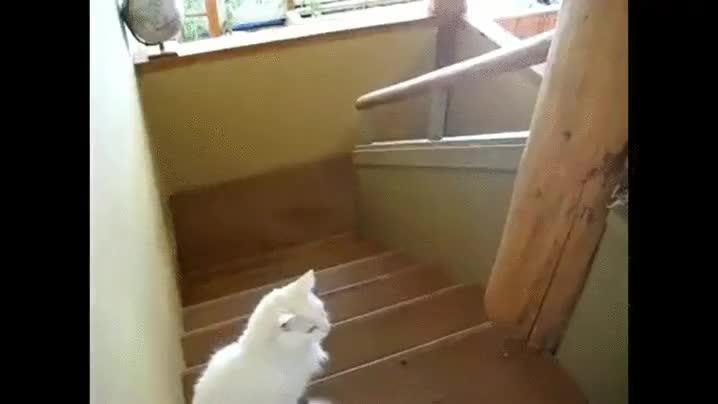 Enlace a Está claro quién es el jefe de la escalera