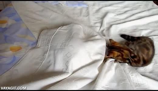 Enlace a Problemas de una madre gata, no hay un lugar donde esconderse