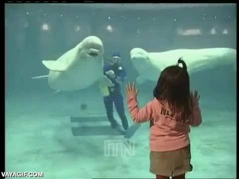 Enlace a Beluga usó rayo burbuja, no es muy efectivo