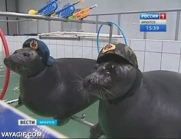 Enlace a Estas focas están un poco locas