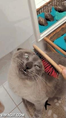 Enlace a Esa cara de gustillo que pone el gato al ser cepillado vale su peso en oro