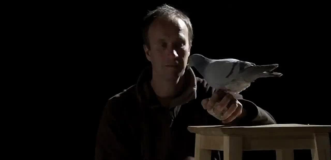 Enlace a Las lechuzas son los depredadores voladores más silenciosos