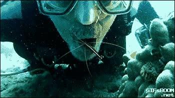 Enlace a Había pensado ir al dentista a hacerme una limpieza dental, pero ese día tenía inmersión y aproveché
