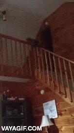 Enlace a Podría bajar las escaleras como los gatos normales, pero no