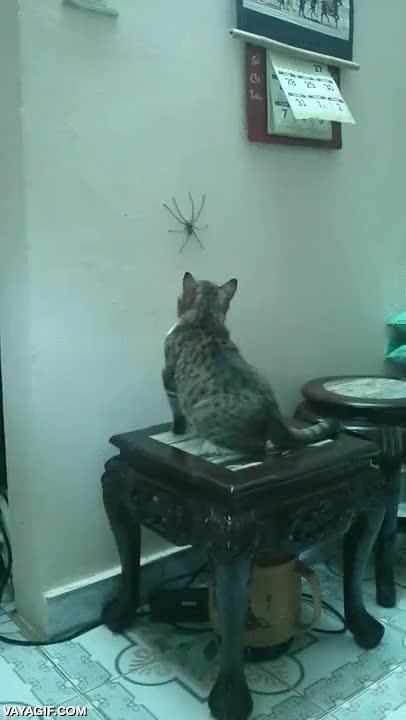 Enlace a ¿Te dan miedo las arañas? ¡Adopta a un gato!