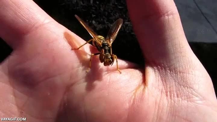 Enlace a Las mantis religiosas machos se han cansado de que les coman la cabeza y han buscado nuevas parejas