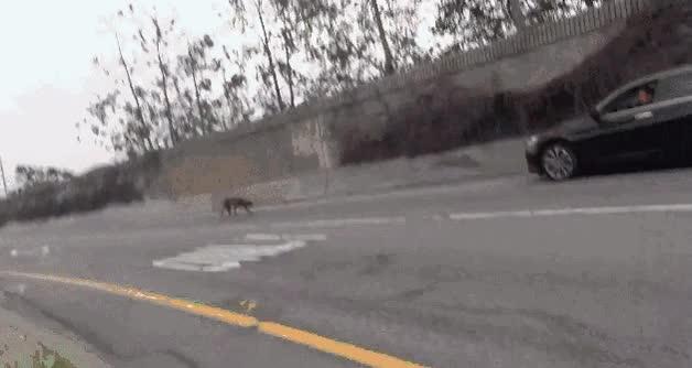 Enlace a Perro herido y asustado rescatado en mitad de la autopista, la historia acaba bien