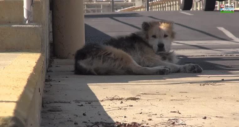 Enlace a Un perro abandonado en una depuradora de agua recibe el rescate que se merecía