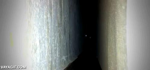 Enlace a Algo acecha en la oscuridad