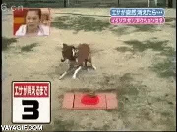 Enlace a El perro que no permitió que la tele japonesa lo trollease