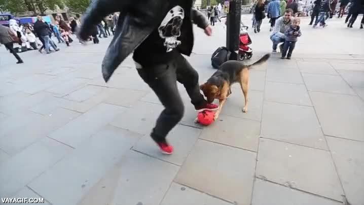 Enlace a Un perro siempre tiene las de ganar contra un humano con una pelota de por medio, casi siempre