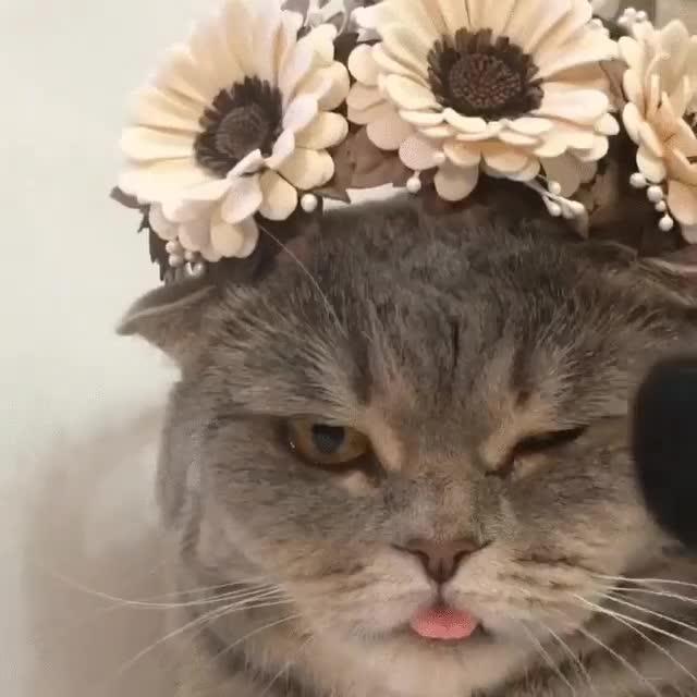 Enlace a La gata Melissa preparándose para una nueva sesión de fotos, no sé si le gusta o solo se resigna