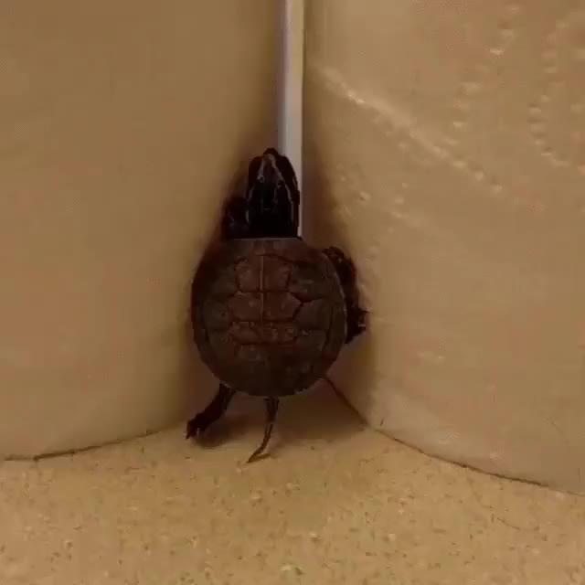 Enlace a Las Tortugas Ninja en sus primeros años de entrenamiento