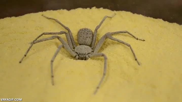 Enlace a La expresión ''tierra, trágame'' es muy literal para algunas arañas