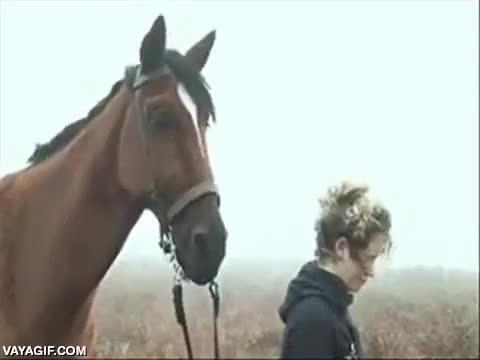 Enlace a La magia del cine, con todos ustedes, 'Joey' el caballo animatrónico de la peli War Horse