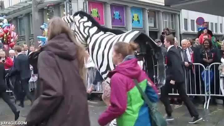 Enlace a La típica cebra que acaba partida en dos en mitad de un desfile, tranquilos, no es de verdad