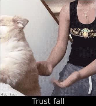 Enlace a Sabes que tu perro confía en ti cuando...