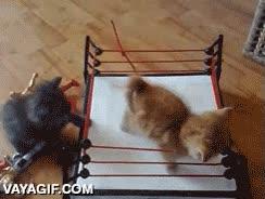 Enlace a ¿WWE? Nah, mejor PCW, professional cat wrestling