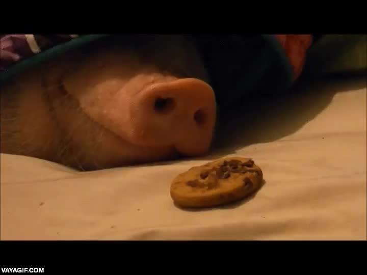 Enlace a No hay mejor manera de despertar a un cerdo. Conmigo también funcionaría
