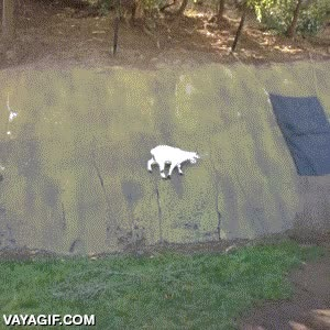Enlace a Las cabras no respetan las leyes de la física