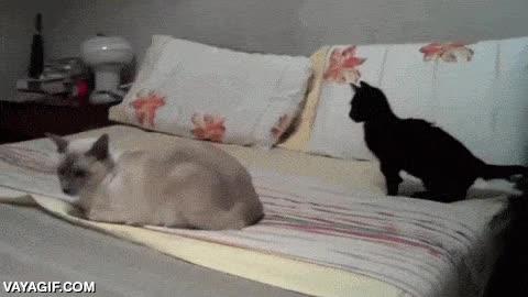 Enlace a Así se despierta mi madre cada día