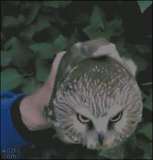 Enlace a No has visto un animal con mayor estabilidad de cabeza