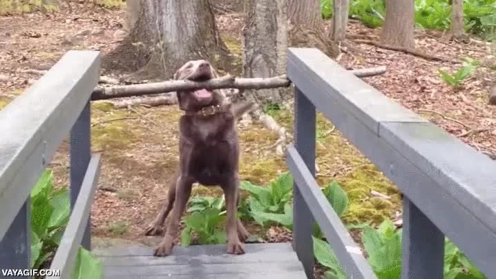 Enlace a Creo que este perro ha encontrado un problema y sabe cómo resolverlo
