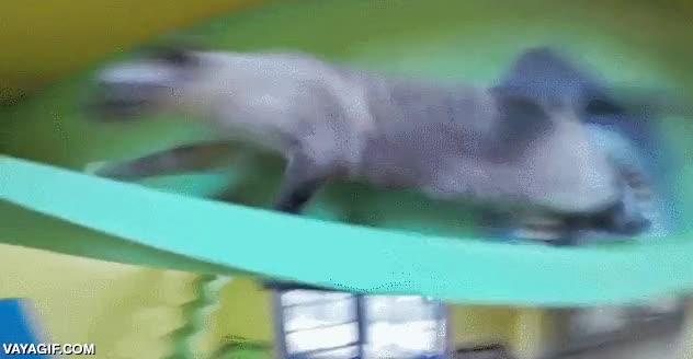 Enlace a ¡Que bien se lo han montado a este gato!
