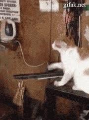 Enlace a Este gato es más educado que muchas personas que conozco