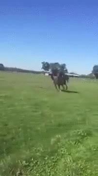 Enlace a Nota mental: Si te caes del caballo, no lo persigas desde detrás
