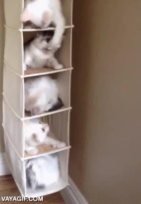 Enlace a Los gatos siempre han sido más organizados que los perros