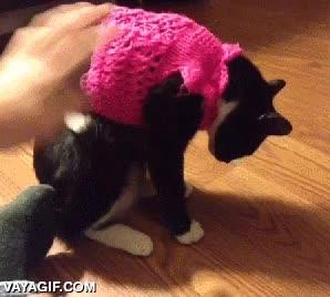 Enlace a Gato.exe ha dejado de funcionar. Retirar suéter estúpido y reiniciar sistema.