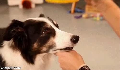 Enlace a La cara del perro lo dice todo, está muy cansado de aguantar las tonterías de su humana