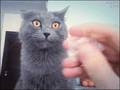Enlace a El gato que reaccionaba de manera extraña al oír el ruido de este plástico arrugándose