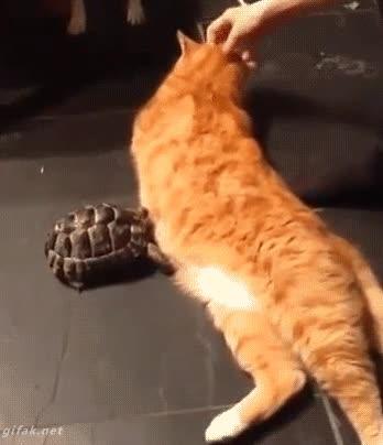 Enlace a ¡Quita! ¡Del medio! ¡Maldito! ¡Mamífero gordo!