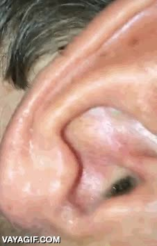 Enlace a Así que notas un picorcillo dentro del oído...