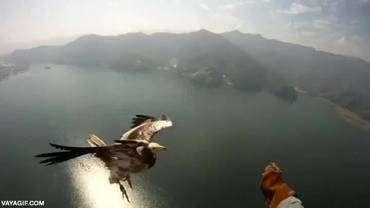 Enlace a La típica águila que solo pasaba a saludar a este parapentista